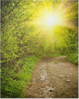 Path in the forest Poster