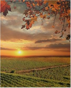 Poster Paysage de vigne in Chianti, Italie
