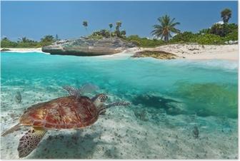 Poster Paysage mer des Caraïbes avec la tortue verte au Mexique