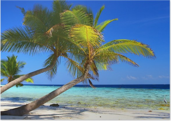 phenomenal beach with palm trees and bird Poster - Themes