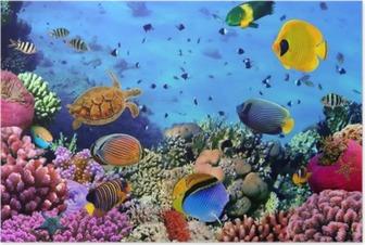 Poster Photo d'une colonie de corail