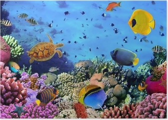 Photo of a coral colony Poster