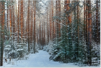 pine forest, winter, snow Poster