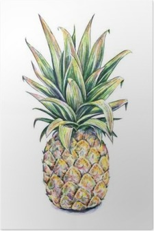 Pineapple on a white background. Watercolor illustration Poster