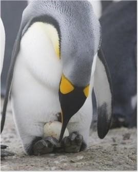 Poster Pingouin avec l'oeuf