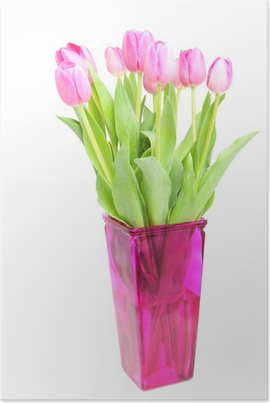 Pink Dutch Tulips In Vase Over White Background Poster Pixers