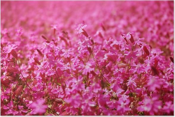 Pink flower field poster pink flower field poster mightylinksfo