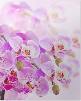 pink orchid branch close up Poster