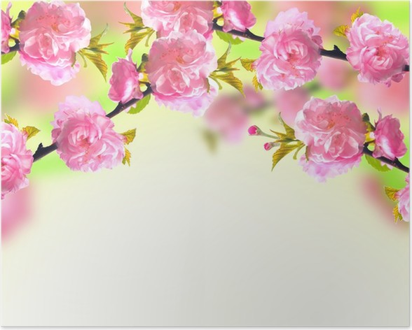 Pink Sakura Blossom Spring Background Poster Pixers We Live To