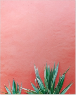 Plants on pink concept. Aloe on pink background wall. Minimal art Poster