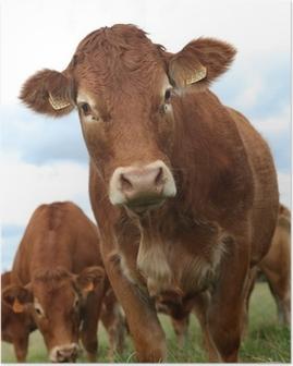 Portrait de vache Poster