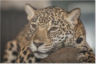 Poster Portret van leopard