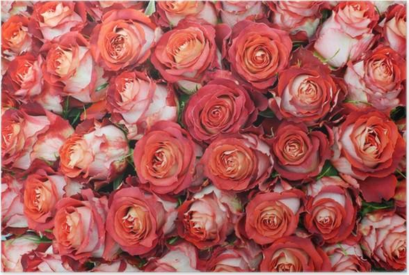 pster primer plano de manojo brillante de grandes hermosas rosas rojas recin cortadas - Fotos De Rosas Rojas Grandes