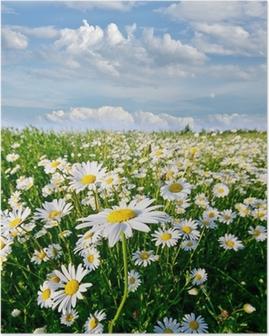 Poster Printemps: champ de fleurs de marguerite avec le ciel bleu et les nuages