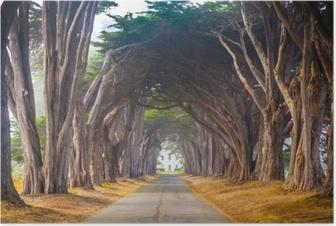 Póster Punto reyes árbol del cress túnel