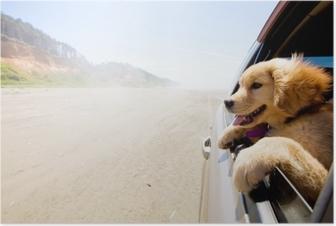 Poster Puppy kijkt uit het raam van een auto