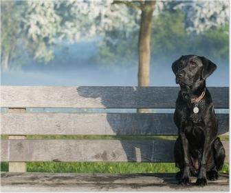Poster Puppy labrador op de bank