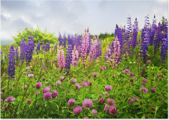 Purple and pink wildflowers poster pixers we live to change purple and pink wildflowers poster mightylinksfo
