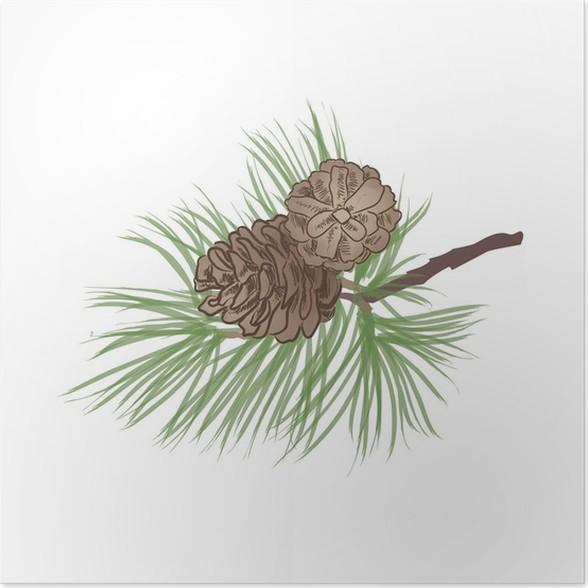 Póster Rama de un árbol de pino. Colección Piña. Conjunto cono ...