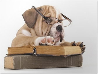 Poster Rasechte Engels Bulldog in glazen en boek