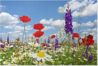 red poppy and wild flowers Poster