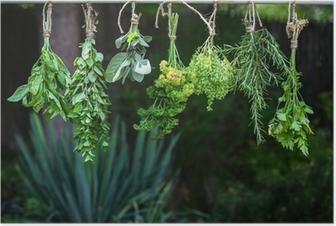 Poster Réglez d'herbes pendaison et le séchage