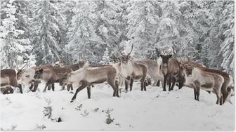 Poster Reindeer