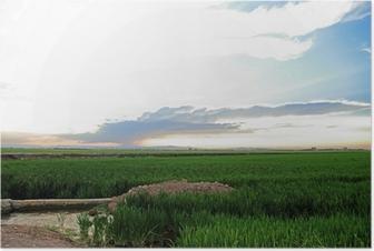 Poster Rijstvelden La Albufera natuurgebied provincie Cullera Valencia