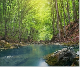 Poster River i fjällskogen.