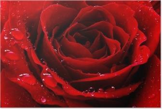 Poster Rode roos met water druppels