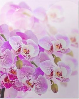 Poster Rose orchidée branche de près