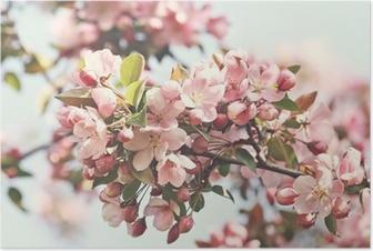 Poster Roze appelbloesem in het voorjaar