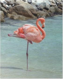 Poster Roze flamingo