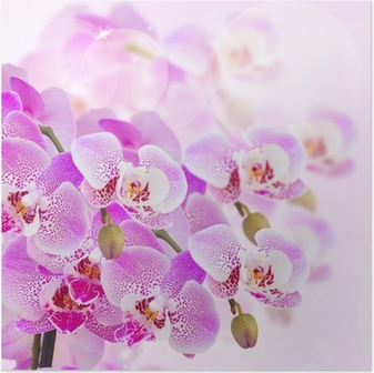 Poster Roze orchidee tak close-up
