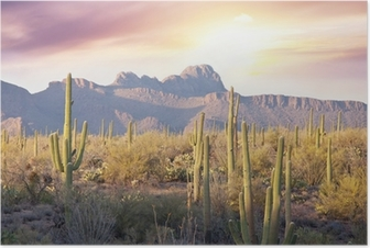 Póster Saguaro Parque