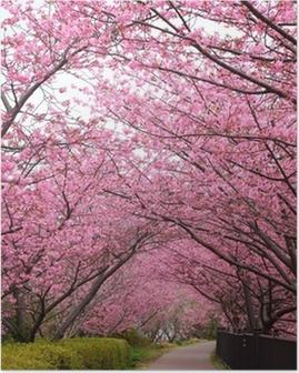 Poster Sakura arc