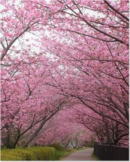 Sakura arch Poster