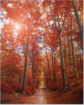 Poster Sentier à travers le parc de l'automne unde la lumière du soleil