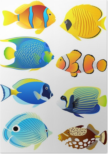 Set Of Tropical Fish Poster