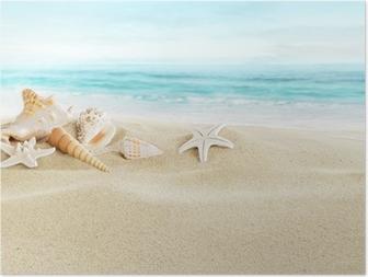 Shells on sandy beach Poster