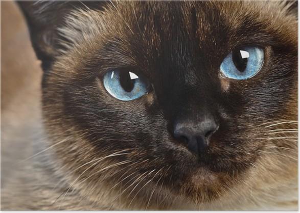 cat ear mites vs ear wax