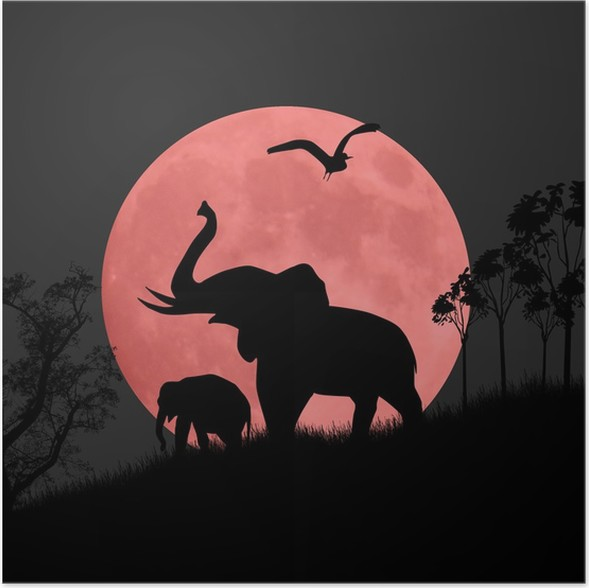 Silhouette view of elephants at night Poster • Pixers® • We live to ...
