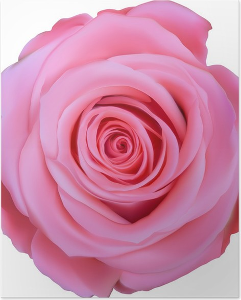 Single pink rose top view illustration poster pixers we live to single pink rose top view illustration poster mightylinksfo