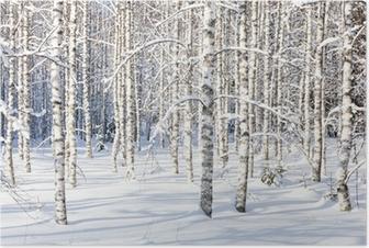 Snowy birch trunks Poster