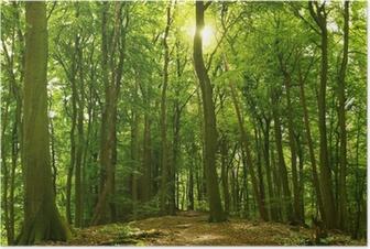 Sonniger Sommerwald Poster