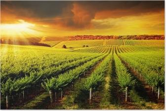 Poster Stunning Vineyard Sunset