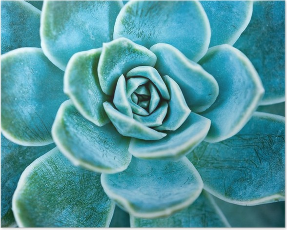 Succulent plant leaves. Poster - Plants and Flowers