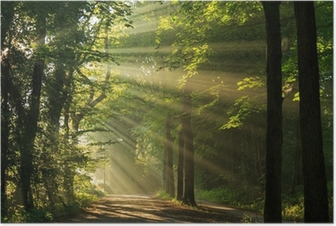 Sun rays shining through the forest Poster