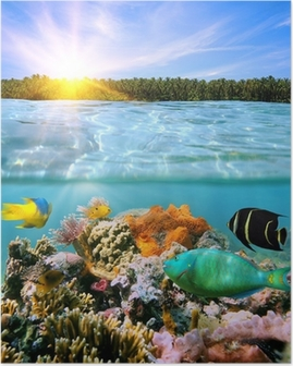 Sunset and colorful underwater marine life Poster