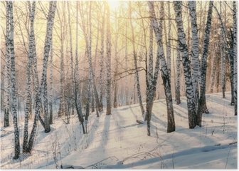 Sunset in a winter forest Poster
